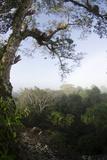 Rainforest Canopy. Yasuni NP, Amazon Rainforest, Ecuador Photographic Print by Pete Oxford