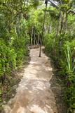 Nature Trail Path, Playa del Carmen, Riviera Maya, Yucatan, Mexico Photographic Print by Charles O. Cecil