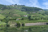 Europe, Portugal, Penajoia Vineyards, Douro River Valley, Douro River Photographic Print by Lisa S. Engelbrecht