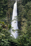 Hawaii Islands, Honolulu, 1100 Alakea St., View of Beautiful Waterfall Photographic Print by Douglas Peebles