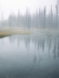 Lodge Pole Pines Along Fire Hole Lake, Yellowstone NP, Wyoming Photographic Print by Greg Probst