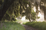 Morning Light Illuminating the Moss Covered Oak Trees in Florida Photographic Print by Sheila Haddad