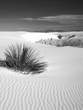 USA, New Mexico, White Sands National Monument. Bush in Desert Sand Photographic Print by Dennis Flaherty