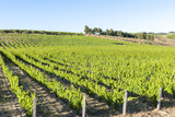 Europe, Portugal, Favaios, Vineyards Photographic Print by Lisa S. Engelbrecht