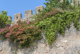 Europe, Portugal, Obidos, Flowering Plant and Vine on Battlement Wall Photographic Print by Lisa S. Engelbrecht