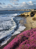 USA, California, La Jolla, Flowers Along the Pacific Coast Fotoprint van Christopher Talbot Frank