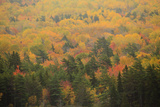 USA, Maine, Acadia NP, Fall Foliage at Acadia NP Photographic Print by Joanne Wells
