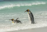 Falkland Islands, East Falkland. King Penguins in Beach Surf Photographic Print by Cathy & Gordon Illg