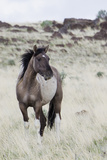 Wild Horse, Steens Mountains Photographic Print by Ken Archer