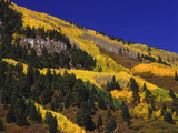 Hillside of Aspen Trees and Evergreen Trees, La Plata County, Colorado Photographic Print by Greg Probst