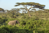 Elephant Walks Through Jungle Landscape, Ngorongoro, Tanzania Photo by James Heupel