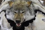 USA, Alaska, Ketchikan, Downtown Summertime. Wolf Skin Photographic Print by Savanah Stewart