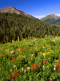 Colorado, Maroon Bells-Snowmass Wilderness. Wildflowers in Meadow Photographic Print by Steve Terrill