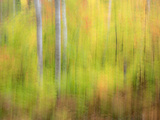 Michigan, Upper Peninsula. a Panned Motion Blur of Autumn Woodland Photographic Print by Julie Eggers