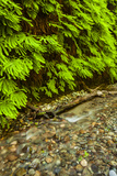 USA, California, Redwoods National Park. Scenic of Fern Creek Photographic Print by Cathy & Gordon Illg