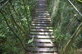 Suspension Bridge, Pacaya-Samiria Reserve, Amazon Rainforest. Peru Photographic Print by Mallorie Ostrowitz
