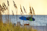 A Day at the Beach Is Seen Through the Sea Oats, West Coast, Florida Photographic Print by Sheila Haddad