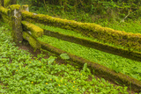 USA, California, Redwoods National Park. Moss-Covered Fence Photographic Print by Cathy & Gordon Illg