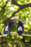 Male and Female Hornbills, Lake Manyara National Park, Tanzania Photo by James Heupel