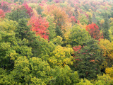 Michigan, Upper Peninsula. Colorful Autumn Tree Scenic Photographic Print by Julie Eggers