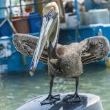 Mexico, Bay of Banderias, La Cruz de Huanacaxtle. Pelican Photographic Print by Emily Wilson