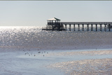 Mississippi, Bay St Louis. Shorebirds and Pier Seen from Marina Photographic Print by Trish Drury