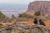 USA, Utah, Canyonlands National Park. Pair of Ravens on Log Photographic Print by Cathy & Gordon Illg