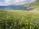 Coastal Wildflowers, Huisinis, Machair. Isle of Harris, Scotland Photographic Print by Martin Zwick