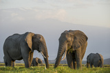 Kenya, Amboseli National Park, Elephant Photo by Alison Jones