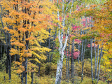 Michigan, Upper Peninsula. Hardwood Forest in Ontonagon County in Fall Photographic Print by Julie Eggers