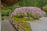 Weeping Cherry, Pavilion, Portland Japanese Garden, Portland, Oregon Photographic Print by Michel Hersen