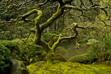 Japanese Maple, Portland Japanese Garden, Portland, Oregon (PR) Photographic Print by Michel Hersen