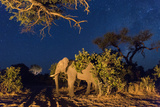 Botswana, Chobe NP, African Elephant Stands in Kalahari Desert, Night Photo by Paul Souders