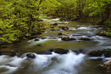 Tennessee, Spring Reflections on Little River at Smoky Mountains NP Photographic Print by Joanne Wells