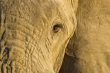 Botswana, Chobe NP, Eye of Elephant in Savuti Marsh at Sunset Photo by Paul Souders