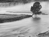 USA, Wyoming, Yellowstone, Firehole River and Tree Photographic Print by John Ford