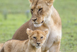 Lioness with its Cub Standing Together, Ngorongoro, Tanzania Photo by James Heupel