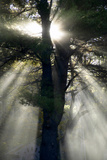 Usa, New England, New Hampshire, Sunlight Through Trees Photographic Print by John Ford