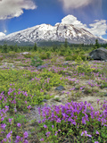 Washington State, Gifford Pinchot NF. Mount Saint Helens Landscape Photographic Print by Steve Terrill