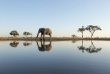 Botswana, Chobe NP, African Elephant at Water Hole in Savuti Marsh Foto von Paul Souders