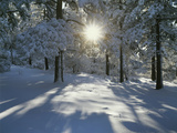 California, Cleveland NF, the Sunbeams Through Snow Covered Pine Trees Photographic Print by Christopher Talbot Frank