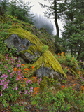 USA, Oregon, Mt. Hood NF. Hillside of Trees and Wildflowers Photographic Print by Steve Terrill
