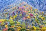 Tennessee, Great Smoky Mountains NP, View Along Newfound Gap Road Photographic Print by Jamie & Judy Wild