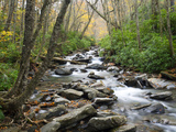 Tennessee, Great Smoky Mountains National Park, Alum Cave Creek Photographic Print by Jamie & Judy Wild
