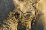 Botswana, Moremi Game Reserve, African Elephant in Okavango Delta Photo by Paul Souders
