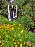 Oregon, Columbia River Gorge National Scenic Area. Triple Falls Photographic Print by Steve Terrill