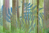 USA, Washington State, Seabeck. Collage of Bracken Ferns and Forest Photographic Print by Don Paulson