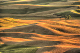Aerial View of Farms, Steptoe Butte Park, Palouse Area, Washington Photographic Print by Stuart Westmorland