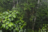 Rainforest Rain Storm, Yasuni NP, Amazon Rainforest Ecuador Photographic Print by Pete Oxford