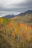 USA, Colorado, Gunnison NF. Aspen Grove at Peak Autumn Color Photographic Print by Don Grall